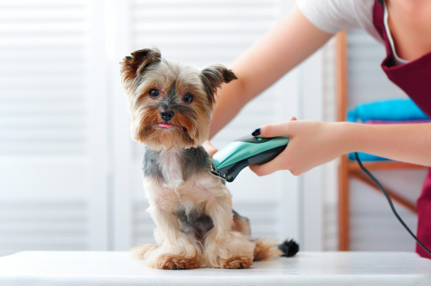 Best services are offered by the professional groomers so your pets can stay happy and healthy at Doral.
